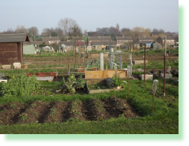 Picture of Elm Street Allotments